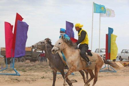 Лошади, адайской породы, которых на Мангистау веками ценили за выносливость и настоящий степной характер, получили мировое признание