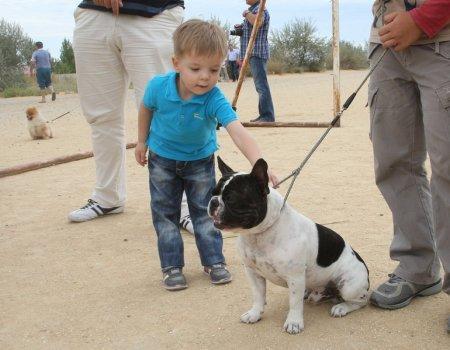 Сразу две многопородные выставки собак прошли в Актау