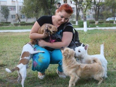 Cобака, являющаяся гордостью актауского клуба собаководства, была избита неизвестным хулиганом