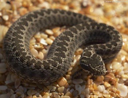 От укуса змеи в городе Жанаозен чуть не умер подросток