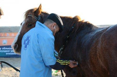 Первые международные соревнования по конному спорту прошли в городе Жанаозен