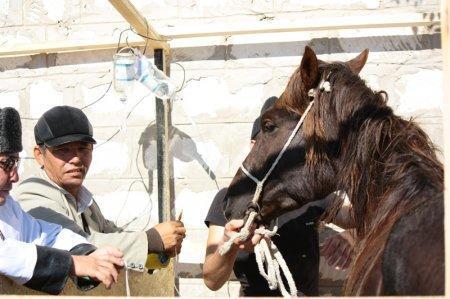 Не выдержавшей нагрузки лошади была поставлена капельница