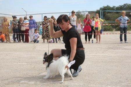 В Актау пообещали создать места для выгула собак