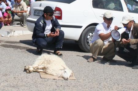 По заверению городских властей, резать барана в Актау можно лишь на убойных площадках