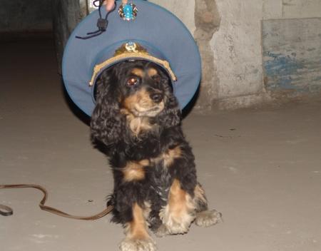 На Мангистау лучшие борцы с наркотиками — это собаки