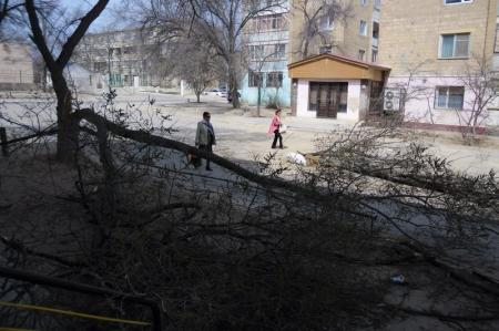 В Актау экскаваторщик продвигаясь по городу завалил два дерева