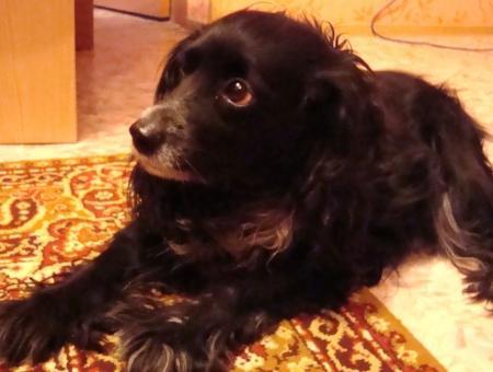 Две собаки, ранее принадлежавшие  погибшей 12 апреля на дороге между 13 и 15 мкр женщине, ищут новых хозяев.