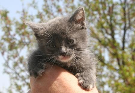 Еще один очаровательный котенок ищет добрых хозяев