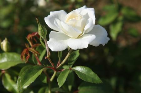Около миллиона цветов этим летом украсят клумбы Актау
