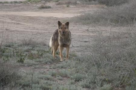 Организация, занимающаяся отловом бродячих собак в Актау, отказалась выполнять свои обязанности