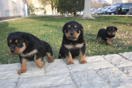 """Аян Медресинов: """"В Актау будут отведены специальные места для выгула собак"""""""