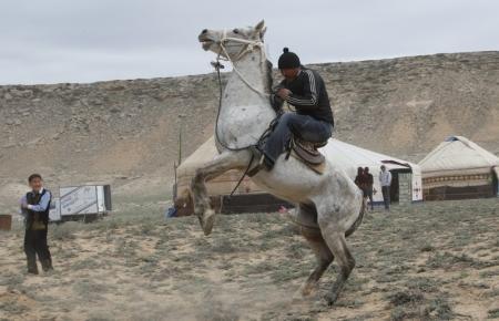 На республиканских соревнованиях по конному спорту победил жанаозенский спортсмен на лошади Адайской породы