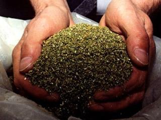 На станции Мангистау задержана крупная партия марихуаны
