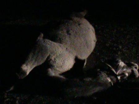 В Мангистау в результате наезда на верблюда тяжелые травмы получили два человека
