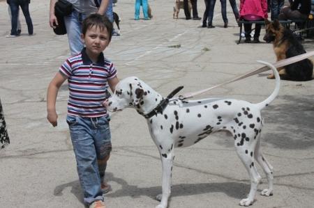 """В Актау пройдет выставка собак """"Осенний листопад 2012"""""""