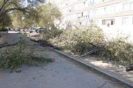 Жители Актау протестуют против вырубки деревьев
