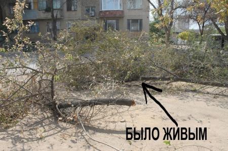 Идет планомерное УНИЧТОЖЕНИЕ деревьев в Актау