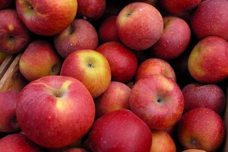 Житель Актау пытался провезти контрабандным путем яблоки, золотые украшения и женские юбки