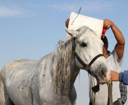 На международном турнире в Актау все призовые места достались всадникам на лошадях адайской породы