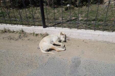 Жители Актау хотят создать приют для бездомных животных