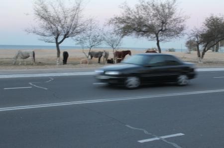 По Актау гуляют лошади