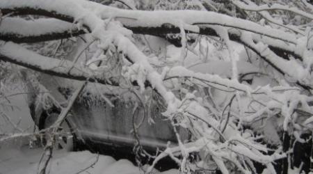 в Алматы 70 автомобилей пострадали из-за упавших деревьев