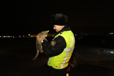 В Мангистау сотрудник дорожной полиции не дал погибнуть котенку