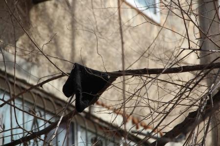 Фотопост. В Актау расцвели деревья