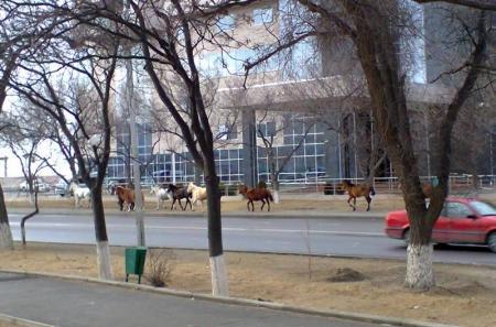 """В Актау """"городские скачки"""""""