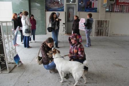 Активисты общества «Приют Актау» выступили против отстрела животных