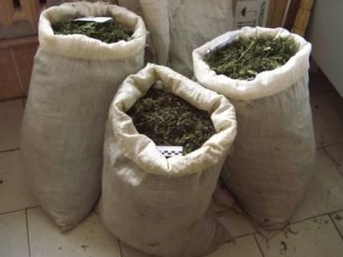 У жителя Мангистауской области изъяли 103 килограмма марихуаны