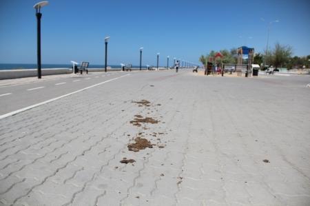 Жители жалуются на то, что Актау превращается в «город экскрементов»