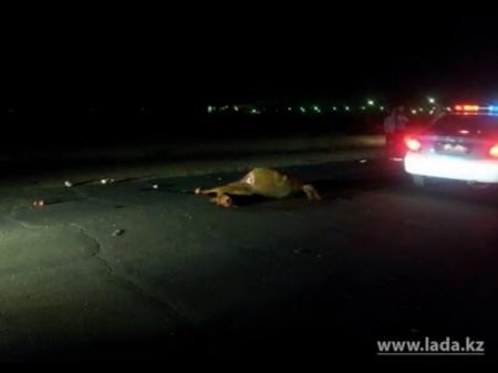 Пострадавшая при столкновении лошади и мотоцикла девушка умерла в реанимации