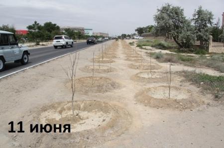 Эксперты-озеленители: Деревья на аллее около военно-морского института посажены для отвода глаз