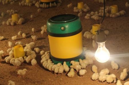 Цыпленок родился. История в фотографиях