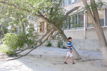 Кто в Актау должен заниматься уборкой и вырубкой погибших деревьев?