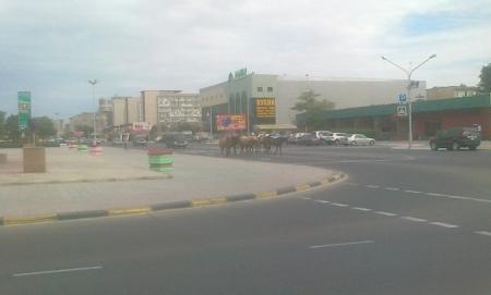 Стадо в центре города