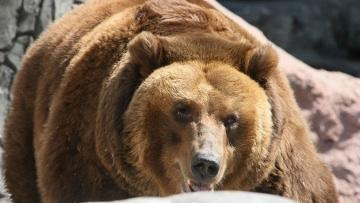 Туристка из Казахстана провела ночь на дереве, спасаясь от медведя в Черногории