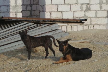 Пора отстреливать собак бесхозных