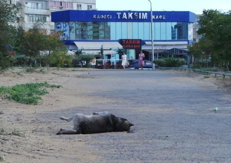 Труп собаки вторые сутки лежит в центре Актау