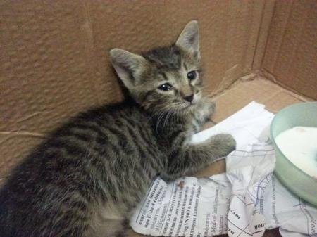 Застрявшего в штрабе одного из домов Актау котенка, спасли при помощи кусочка колбасы