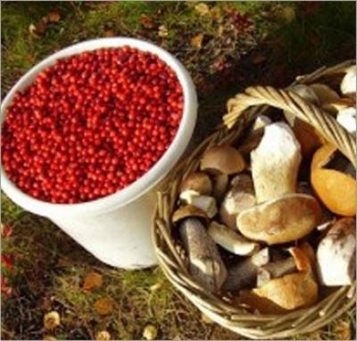 В ЗКО ввели плату за сбор диких ягод и грибов