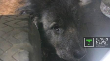 Собака больше двух лет живет в машине хозяина в Павлодаре