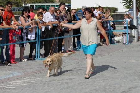 В Актау на площади Астана прошел парад породистых собак