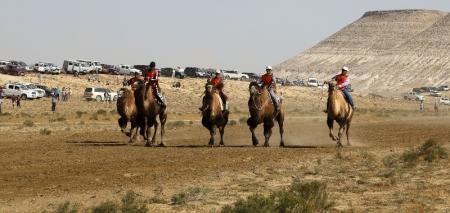 В Мангистау прошли верблюжьи бега