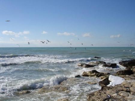 В Актау начат мониторинг 9 искусственных рифов, заложенных в бухте мыса Меловой