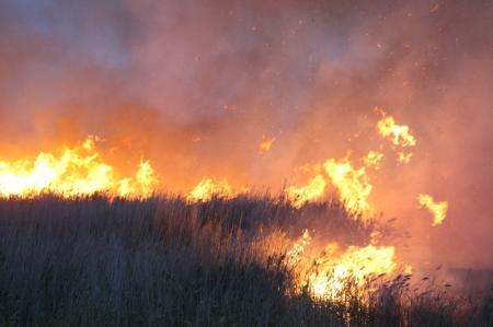В Мангистауском заповеднике Караколь полыхает сильный пожар
