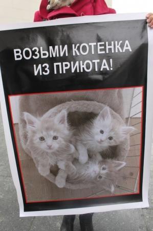 В Актау волонтеры вышли на центральную площадь с плакатами о призыве против отстрела бездомных животных