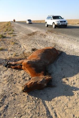 На автотрассе в Мангистау при столкновении с внедорожником погибла лошадь