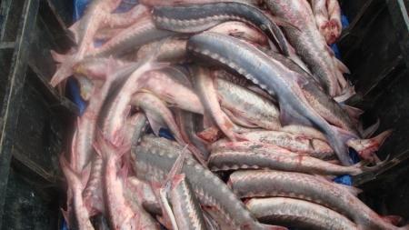 В Тупкараганском районе за браконьерство административные протоколы составлены на шесть человек